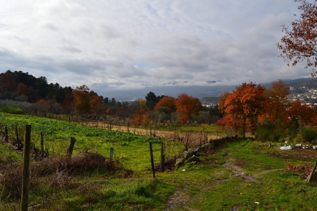 Parque Natural de Alvão met grasvelden en bomen in weilanden