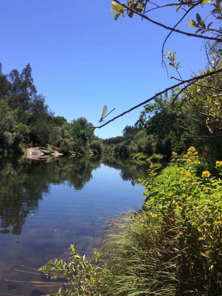 libelle-rivier