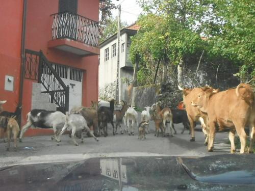 koelen-geiten
