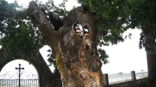 iemand-boom